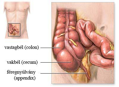 látás emberi test